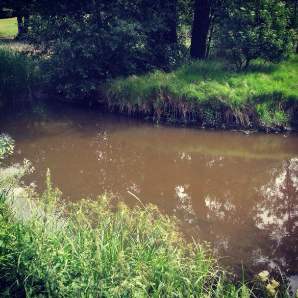 Mysvatten vid Haga parken!